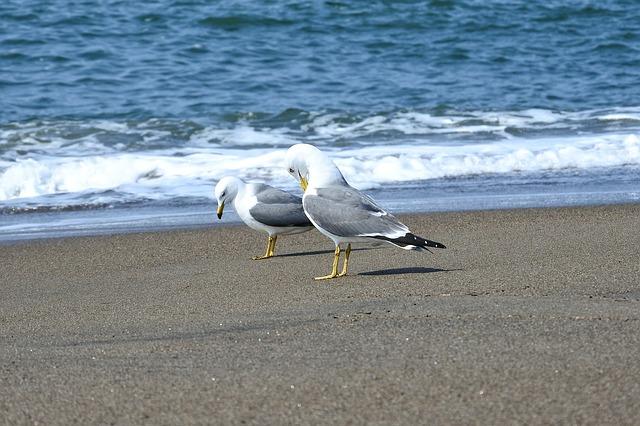 海にたたずむ鳥